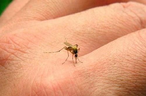 Il virus zika si trasmette anche con le lacrime!