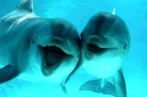 I delfini parlano davvero!